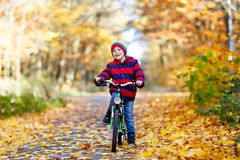 Little kid boy in colorful warm clothes in autumn forest park driving a bicycle Stock Photos