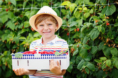 Little kid boy having fun on raspberry farm Royalty Free Stock Images