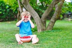 Little kid boy picking cherries in garden Royalty Free Stock Image