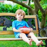 Little kid boy picking cherries in garden, outdoors. stock image