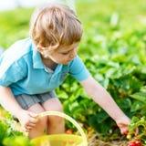 Little kid boy picking strawberries on farm, outdoors. Adorable little toddler kid boy picking and eating strawberries on organic pick a berry farm in summer Stock Image