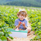 Little kid boy picking strawberries on farm, outdoors. Beautiful little kid boy picking and eating strawberries on organic bio berry farm in summer, child on Royalty Free Stock Image