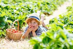 Little kid boy picking strawberries on farm, outdoors. Funny blond little kid boy picking and eating strawberries on organic bio berry farm in summer, on warm Stock Image