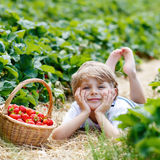 Little kid boy picking strawberries on farm, outdoors. Funny little kid boy picking and eating strawberries on organic bio berry farm in summer, on warm sunny Royalty Free Stock Images