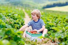 Little kid boy picking strawberries on farm, outdoors. Funny little kid boy picking and eating strawberries on organic bio berry farm in summer, on warm sunny Stock Images