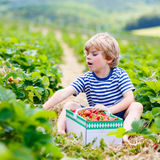 Little kid boy picking strawberries on farm, outdoors. Funny little kid boy picking and eating strawberries on organic bio berry farm in summer, on warm sunny Stock Image