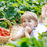 Little kid boy picking strawberries on farm, outdoors. Funny little kid boy picking and eating strawberries on organic plantation in summer, on warm sunny day Stock Image