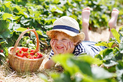 Little kid boy picking strawberries on farm, outdoors. Royalty Free Stock Photography
