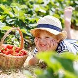 Little kid boy picking strawberries on farm, outdoors. Stock Image