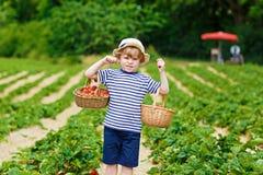Little kid boy picking strawberries on farm, outdoors. Happy adorable little kid boy picking and eating strawberries on organic berry farm in summer, on warm Royalty Free Stock Photos
