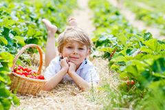 Little kid boy picking strawberries on farm, outdoors. Happy adorable little kid boy picking and eating strawberries on organic berry farm in summer, on warm Royalty Free Stock Images