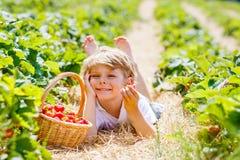 Little kid boy picking strawberries on farm, outdoors. Happy adorable little kid boy picking and eating strawberries on organic berry farm in summer, on warm Stock Photo