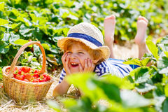 Little kid boy picking strawberries on farm, outdoors. Happy adorable little kid boy picking and eating strawberries on organic berry farm in summer, on warm Royalty Free Stock Photography