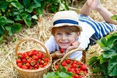 Little kid boy picking strawberries on farm, outdoors. Happy blond little kid boy picking and eating strawberries on organic bio berry farm in summer, child on Stock Image