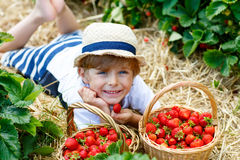 Little kid boy picking strawberries on farm, outdoors. Happy blond little kid boy picking and eating strawberries on organic bio berry farm in summer, child on Stock Photo