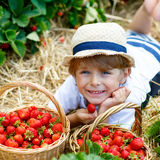 Little kid boy picking strawberries on farm, outdoors. Happy blond little kid boy picking and eating strawberries on organic bio berry farm in summer, child on Royalty Free Stock Images