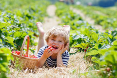 Little kid boy picking strawberries on farm, outdoors. Happy blond little kid boy picking and eating strawberries on organic bio berry farm in summer, on warm Stock Photography