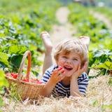 Little kid boy picking strawberries on farm, outdoors. Happy blond little kid boy picking and eating strawberries on organic bio berry farm in summer, on warm Stock Image