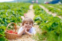 Little kid boy picking strawberries on farm, outdoors. Happy blond preschoool little kid boy picking and eating strawberries on organic bio berry farm in summer Stock Images