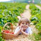 Little kid boy picking strawberries on farm, outdoors. Happy blond preschoool little kid boy picking and eating strawberries on organic bio berry farm in summer Royalty Free Stock Photos