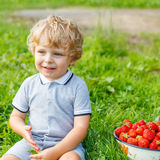 Little kid boy picking strawberries on farm, outdoors. Happy blond little toddler kid boy picking and eating strawberries on organic pick a berry farm in summer Royalty Free Stock Photo