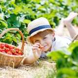 Little kid boy picking strawberries on farm, outdoors. Stock Photo