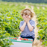 Little kid boy picking strawberries on farm, outdoors. Happy little kid boy picking  strawberries and laughing on organic farm in summer, on warm sunny day Stock Images