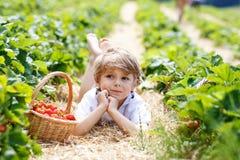 Little kid boy picking strawberries on organic bio farm, outdoors. Happy adorable little kid boy picking and eating strawberries on organic berry bio farm in Royalty Free Stock Photography