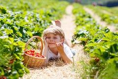 Little kid boy picking strawberries on organic bio farm, outdoors. Happy adorable little kid boy picking and eating strawberries on organic berry bio farm in Stock Images