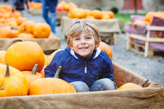 Little kid boy on pumpkin farm celebrating thanksgiving Stock Photos