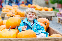 Little kid boy on pumpkin farm celebrating thanksgiving Royalty Free Stock Image