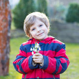 Little kid boy in red jacket holding snowdrop Royalty Free Stock Photography