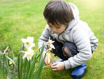 Free Little Kid Boy Using Spray Bottle Watering On Daffodils Flowers Kid Having Fun With Gardening, Active Child Activities In Garden, Royalty Free Stock Photography - 188849267