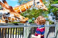 Little kid boy watching and feeding giraffe in zoo. Happy child having fun with animals safari park on warm summer day stock photo