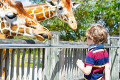 Little kid boy watching and feeding giraffe in zoo. Happy child having fun with animals safari park on warm summer day.  stock photo