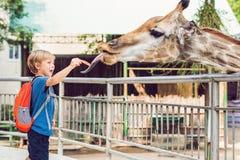 Little kid boy watching and feeding giraffe in zoo. Happy kid having fun with animals safari park on warm summer day.  royalty free stock photo