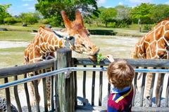 Little kid boy watching and feeding giraffe in zoo. Happy child having fun with animals safari park on warm summer day stock photos