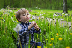 Little kid with dandelions. Cute child playing in a field with dandelions Royalty Free Stock Photo