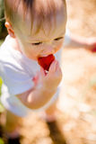 Little kid eating strawberry Stock Images
