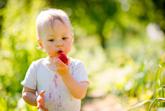 Little kid eating strawberry Stock Photos