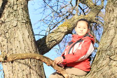 Little kid - girl sitting on tree Royalty Free Stock Photo