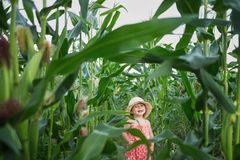 Little kid in a hat laughing in the middle of a corn field. stock images