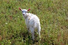 Little kid on the pasture Stock Image