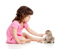 Little kid playing with Scottish fold kitten Stock Photos