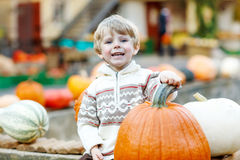 Little kid sitting with lots of pumpkins on patch farm Royalty Free Stock Photography