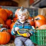 Little kid sitting with lots of pumpkins on patch farm Stock Photos