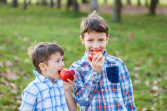 Little kids eating red fresh apple Stock Image