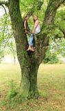 Little kids - girls sitting on tree Stock Photos