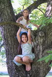 Little kids - girls standing on tree. Little kids - smiling girls standing on big nut-tree stock photos