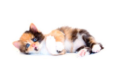 Little kitten Stock Photos